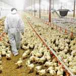 poultry-sector-pakistan