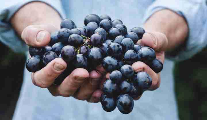 Is Halal the Same as Kosher and Organic?
